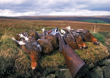 Ban Driven Grouse Shooting: Where are the urbanlefties?
